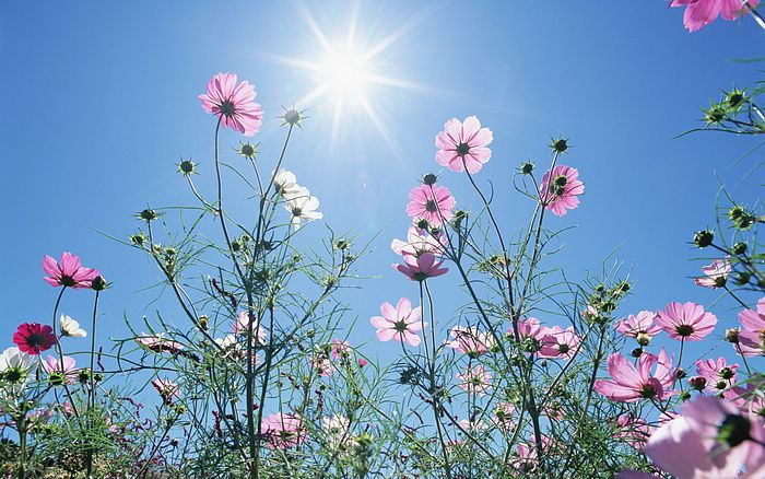 1440x900_Blue_Sky_Flowers_HM031_350A