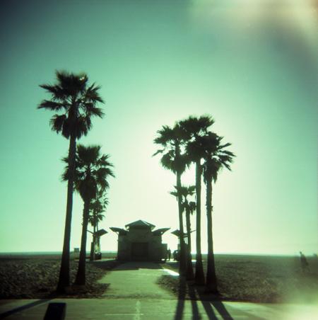 Palmtree oasis