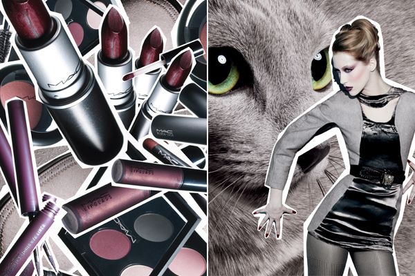 Mac-fabulous-feline-palace-pedigreed