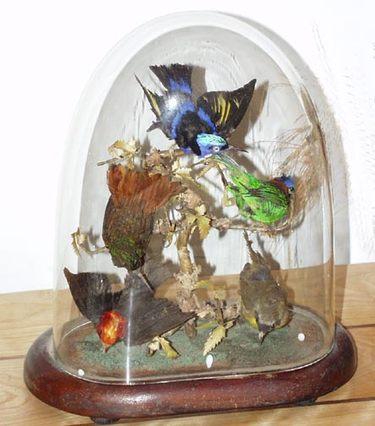 Parlor_birds