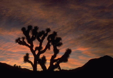 Joshuatreenationalparkatsunset