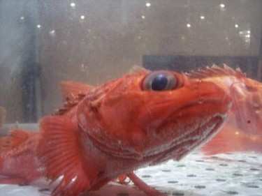 Fishy1_1