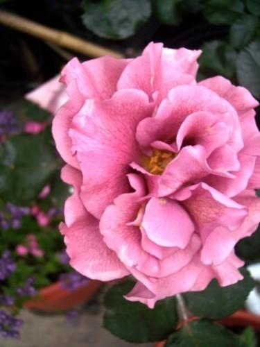 Flora_1