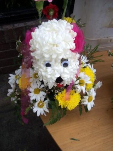 Flowerdog_1