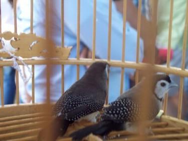 Owlbird1